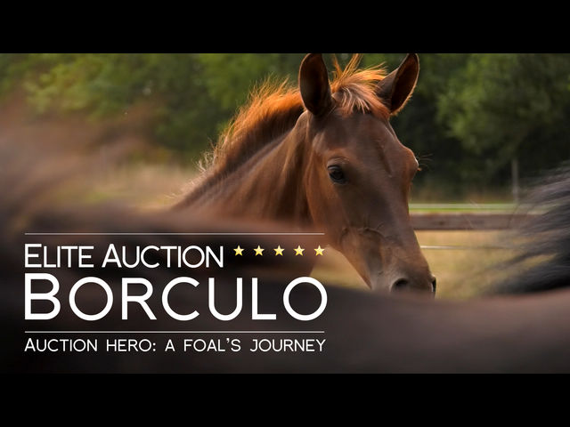 Auction Hero: A Foal's Journey