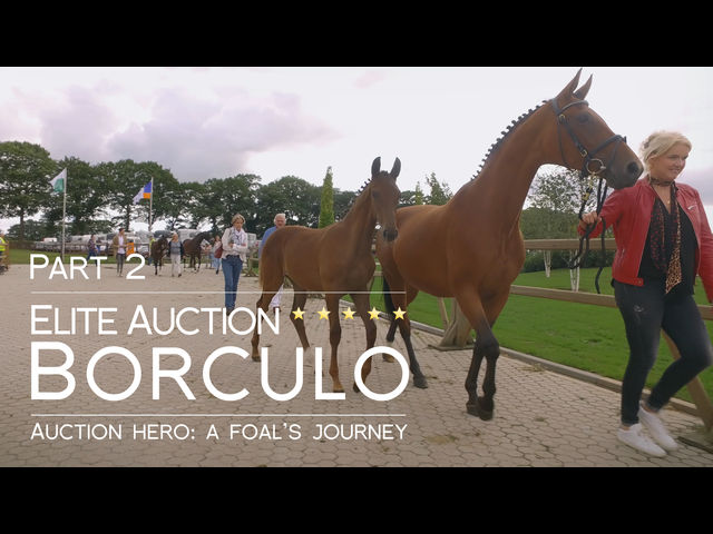 Auction Hero: A Foal's Journey - episode two