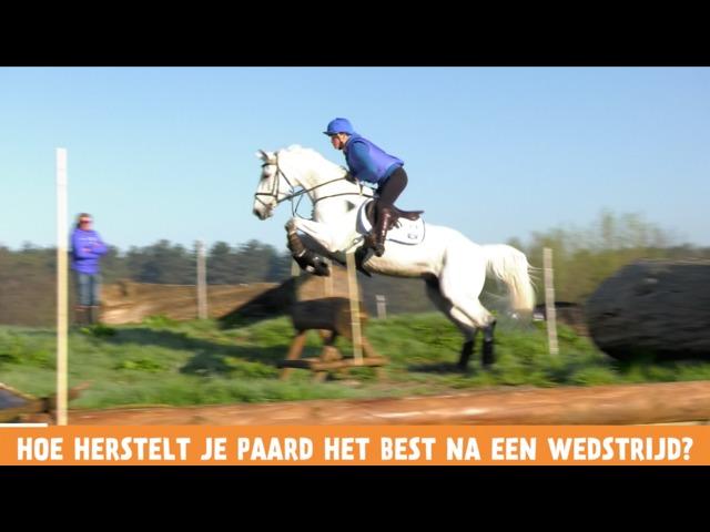 Het Vragenminuutje - Hoe herstelt je paard het best na een wedstrijd?