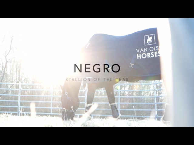 KWPN Ontmoet - Stallion of the year Negro