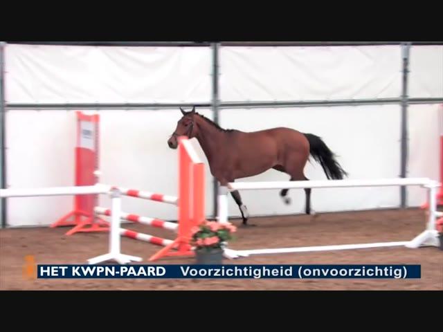 Het KWPN-paard