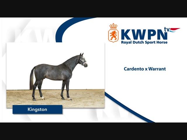 33 - KINGSTON Cardento x Warrant.mp4