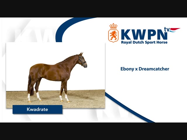 381 – KWADRATE – EBONY X DREAMCATCHER.mp4