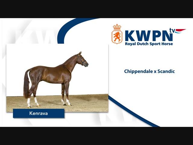 341- KENRAVA – CHIPPENDALE X SCANDIC.mp4
