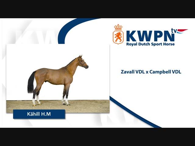 275 – KAHILL H.M. .mp4
