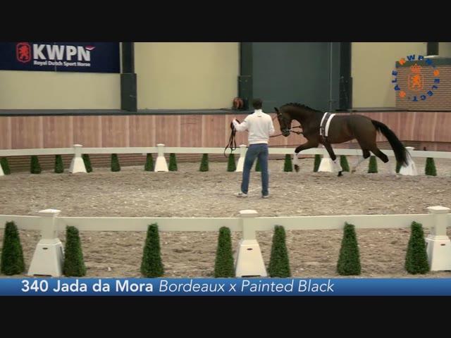 340 - Jada da Mora