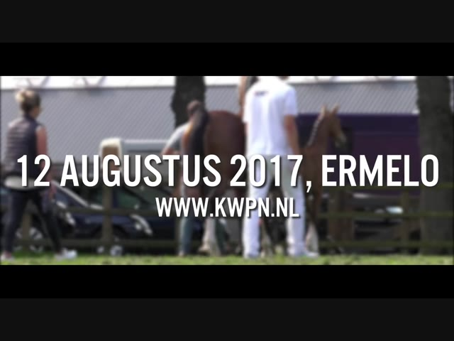 Tuigpaardveulenveiling promo