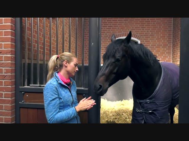 KWPN Ontmoet - Dinja van Liere