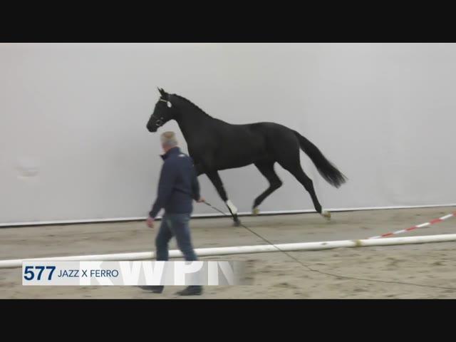 577 - KEANDRO